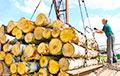 «Сибирь наш»: Китай построил на границе с РФ 30 лесозаводов на 10 км пути