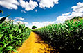 Украина стала лидером по росту экспорта сельхозпродукции в Евросоюз