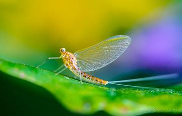 Ученые обнаружили новый вид древних насекомых