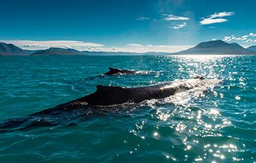 На Земле появился новый океан