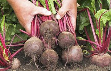 Медики назвали овощ - кладезь питательных веществ