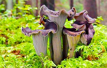 Власти устанавливают фотоловушки на собирающих грибы и ягоды белорусов