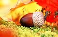 Синоптики: Октябрь подарит еще несколько теплых дней
