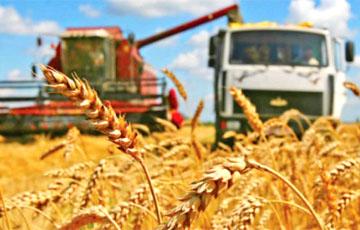 «Битва за урожай» проиграна?