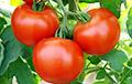 Диетологи рассказали о бесценной пользе помидоров
