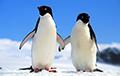 В Новой Зеландии нашли доисторического пингвина-гиганта