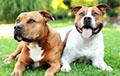 У собак обнаружили сверхспособности к пониманию речи человека