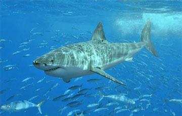Фотафакт: Навукоўцы знайшлі 500-гадовую акулу