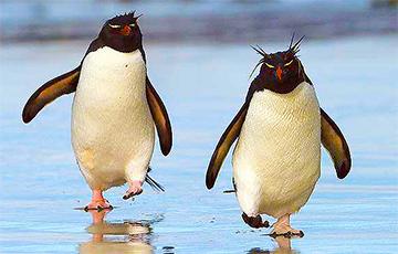 Пингвинов повели смотреть картины в музее