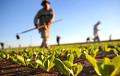 Немецкие фермеры надеются на белорусских рабочих