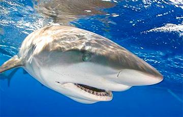 Ученые сняли на видео акулу величиной с подводную лодку