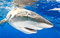 Навукоўцы раскрылі таямніцу дзіўных памераў дагістарычнай акулы
