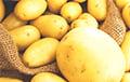 «За месяц почистила больше картошки, чем за всю жизнь»