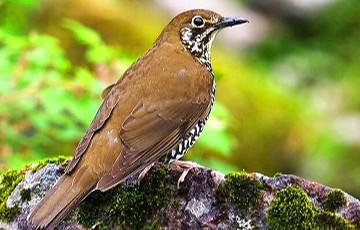 Ученые разгадали главный секрет полетов птиц