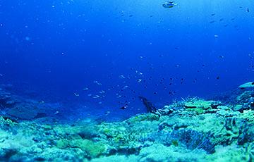 Ученые обнаружили в Индийском океане неизвестных науке существ