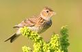 Весна на пороге: какие птицы уже вернулись в Беларусь?