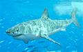 Биологи впервые заметили, как отдыхают акулы