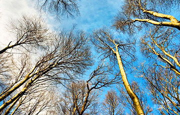 Ученые объяснили невероятно теплую зиму вБеларуси