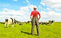 Сельское хозяйство на «игле»: на что пойдут деньги белорусских налогоплательщиков