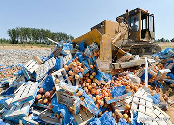 Путин продлил продуктовое эмбарго