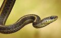 Ученые выяснили, когда змеи начали ползать