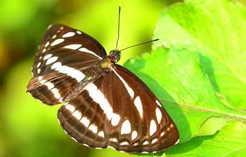 Ученые выяснили, действует ли «эффект бабочки» при путешествиях в прошлое