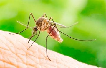 Американский ученый: Комары способны защитить человечество от коронавируса