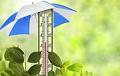 Завтра в Беларуси ожидается до +31°C