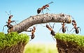 Ученые выяснили, почему муравьи такие сильные