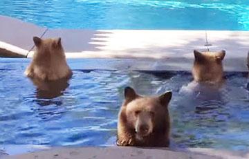 Видеохит: Медведи устроили «вечеринку» в бассейне