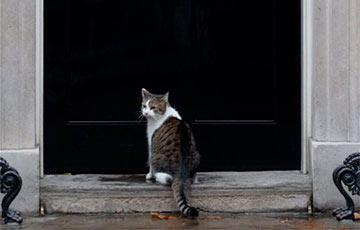 Відэагіт: Галоўны кот Брытаніі перапыніў жывы эфір