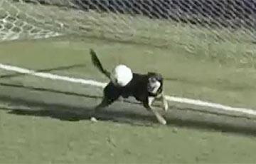 Видеохит: В Аргентине собака стала футбольным вратарем