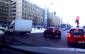 В Новополоцке два лося в час пик гуляли по проезжей части
