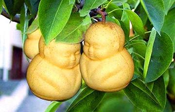 Груша в виде Будды: самые причудливые овощи и фрукты в мире