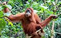Ученые нашли у обезьян способности к бизнесу