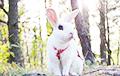 Выучивший много трюков кролик стал звездой Сети