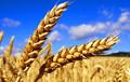 Украина вышла на второе место в мире по экспорту зерна