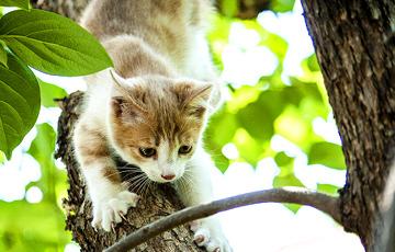 Видеофакт: В Могилеве пятеро спасателей снимали с дерева кота