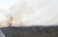 Крупный пожар в Столинском районе тушат 100 человек и два вертолета МЧС