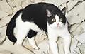 Кот из Гатово продолжает собирать миллионы просмотров на YouTube