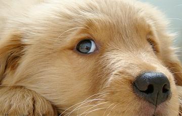 Ветеринары рассказали, как помочь питомцам перенести жару