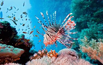 Ученые обнаружили у глубоководных существ феноменальное зрение