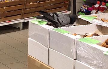 «Мы купили печенье из этой коробки, а по нему, оказывается, ходил голубь!»