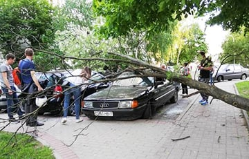 Фотофакт: В минском дворе ни с того ни с сего дерево упало на машины
