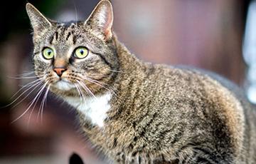 Создан переводчик с кошачьего «языка» на человеческий