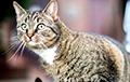 «Переживающий» из-за сериала кот стал звездой Cети