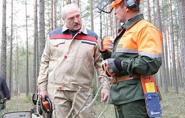 Лукашенко: В лесу мало порядка