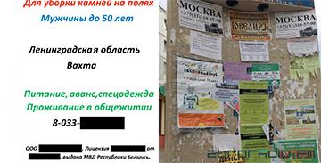 Обещали $700, перевели $80: белорусов вербуют собирать камни с российских полей