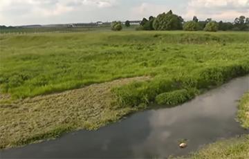 Экологическая катастрофа в Воложинском районе: река сменила цвет