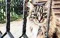 Кошка-эмигрант из Беларуси стала звездой в Бруклине